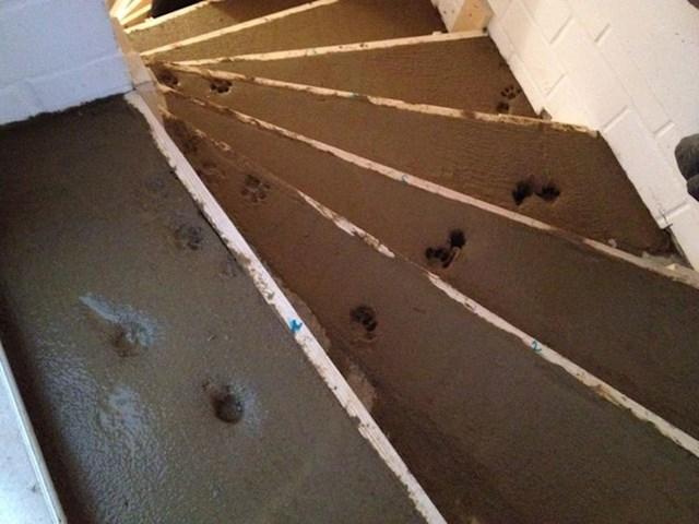 """""""Moj prijatelj je renovirao kuću. Ima mačku."""""""