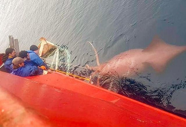 """Prijateljica je snimila ovu fotku na ribarskom brodu na kojem radi."""