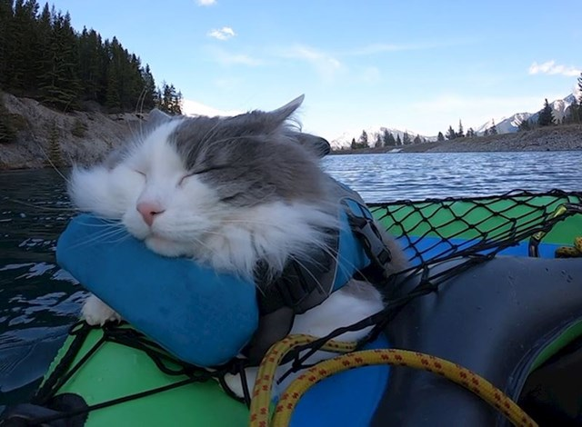 """""""Moja mačka ide sa mnom na avanture, no često na njima zaspi."""""""