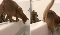 """VIDEO Iz kade je snimala svoje mačke, a onda se dogodio """"zločin"""" koji ju je nasmijao"""