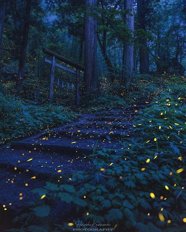 Krijesnice u šumi blizu japanskog grada Nagana