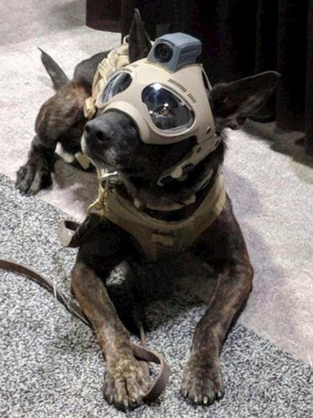 Pas s kacigom za snimanje