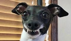 Žena zbog kronične bolesti mora biti u kući pa je udomila psa koji radi smiješne grimase