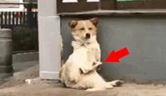 Prolaznik se počeo smijati kad je vidio što ovaj pas radi