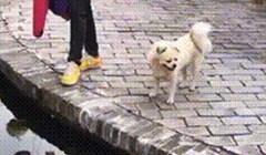 Žena je htjela vidjeti je li pas dovoljno hrabar, no on je dokazao da je pametan