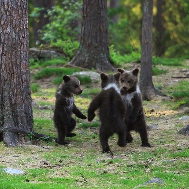 Medvjedići plešu kolo u šumi?!