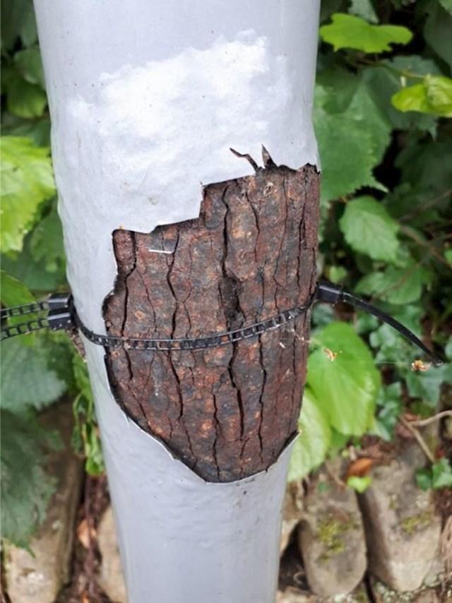 Hrđa na ovom stupu na autobusnoj stanici izgleda kao kora drveta.