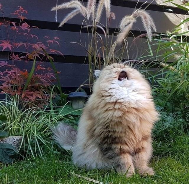 """""""Slušaj me, pjevam!"""""""