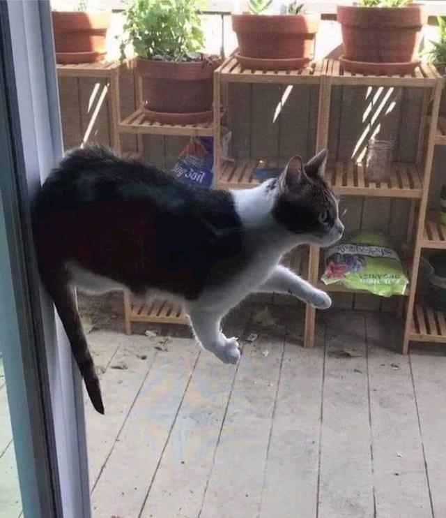 Lebdeća mačka?