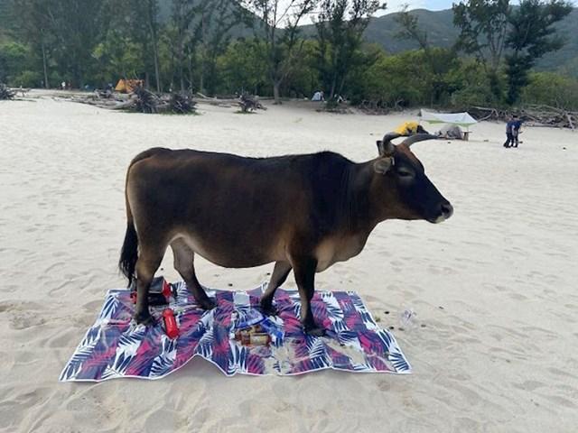 Ostavili su ručnik na plaži. To nije bila dobra odluka.