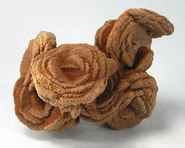 Pustinjska ruža