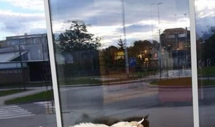 """Žena je objavila sliku """"izgubljenog ljubimca"""" i nasmijala ostale članove Facebook grupe"""