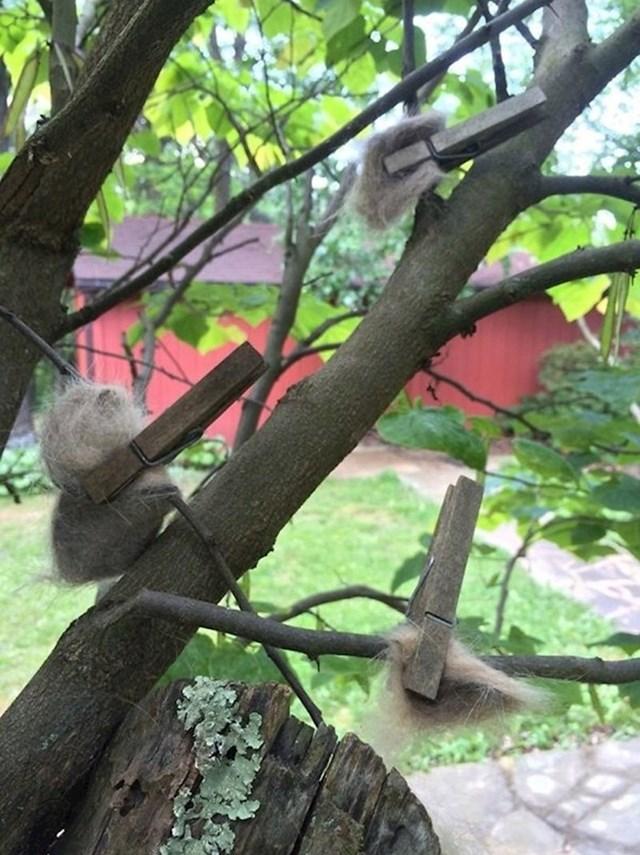 """""""Moja baka skuplja mačju dlaku i ostavlja je pričvršćenu na granama kako bi ptice mogle graditi 'luksuzna gnijezda'."""""""