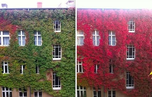 """""""Slikao sam susjednu zgradu prije tjedan dana i danas. Lišće je brzo promijenilo boju, a rezultat je prelijep."""""""
