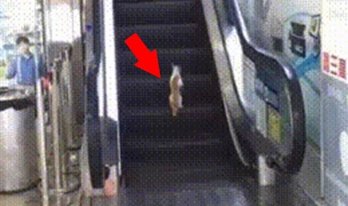 Ova mačka je na smiješan način naučila da odmaranje na pokretnim stepenicama nema smisla