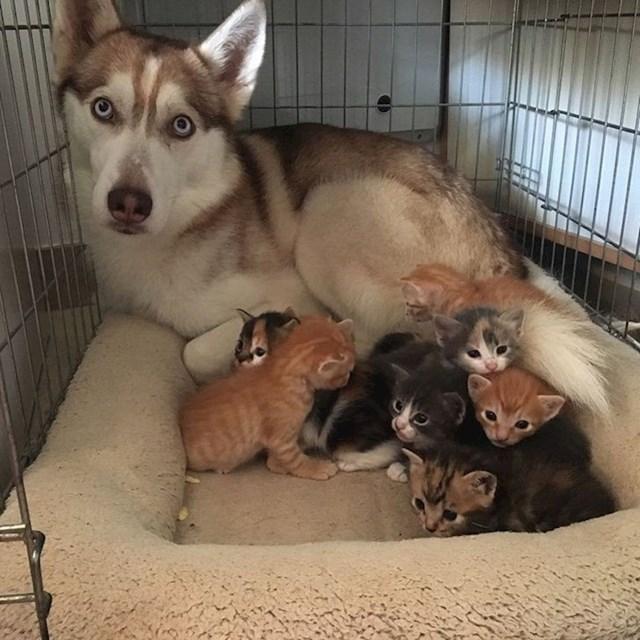 """""""Da, to su moja djeca. Zašto pitaš?"""""""