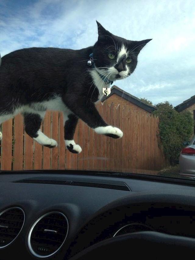 Mačka koja izgleda kao da lebdi...