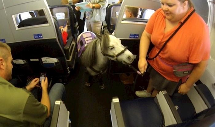 VIDEO Konj Flirty je ušao u povijest zrakoplovstva, a iza svega se krije zanimljiva priča