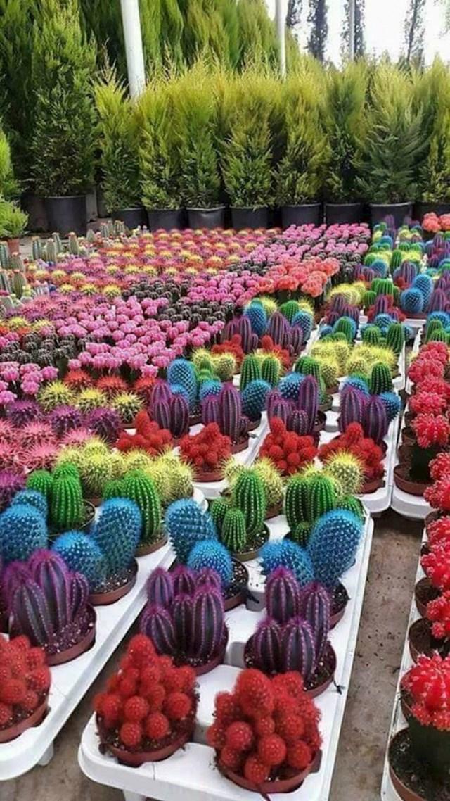 Nisu svi kaktusi zeleni...