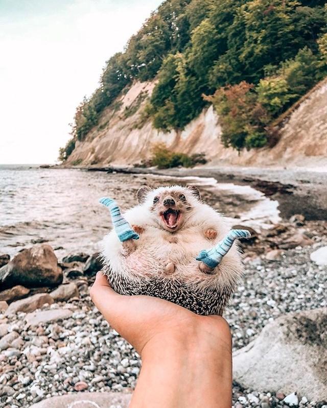 Nasmijani ježić uživa u svojim avanturama...