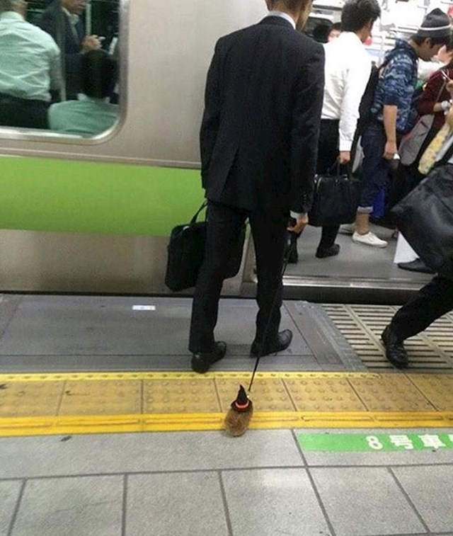 Išao je sa svojim ljubimcem na posao...