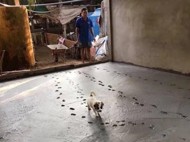 Taman su završili s radovima, a onda im je štene odlučilo pokvariti dan... 😂