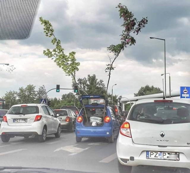 Tko kaže da nije moguće autom prevoziti stabla?