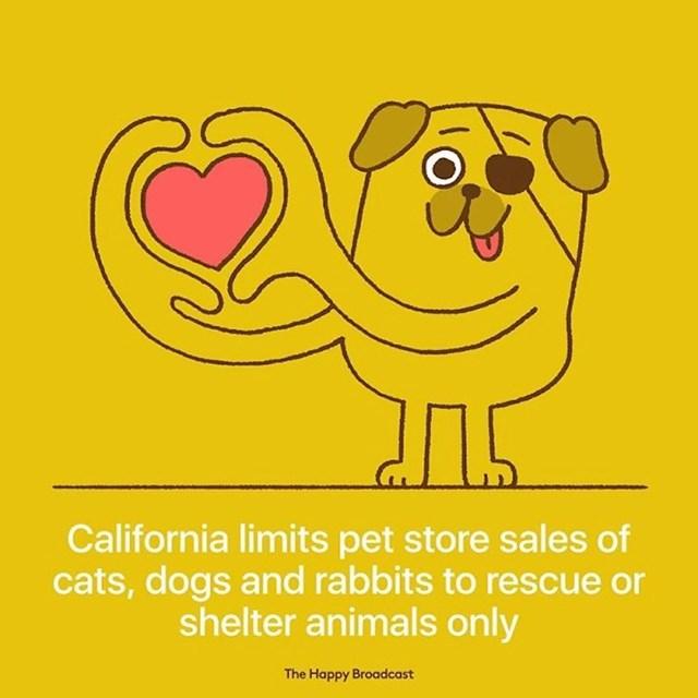 Kalifornija je limitirala prodaju mačaka, pasa i zečeva u zoo trgovinama kako bi spasila što više životinja iz skloništa.