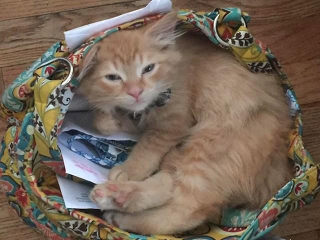 """""""Naša maca je zaspala u ženinoj torbi."""""""