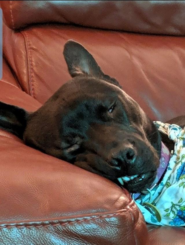 """""""Osoba koja nam nekad čuva psa rekla je da se cijeli dan igrala vani. Vidjelo se da je umorna."""""""