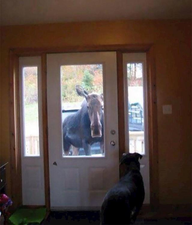 Ni kanadski psi nisu baš uvijek sigurni žele li ići u šetnju.