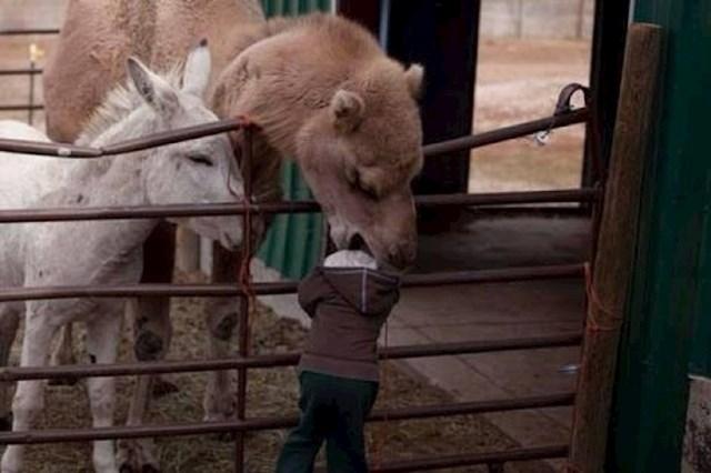 Dijete se htjelo slikati sa životinjama.