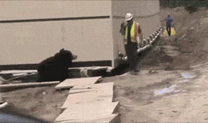 Radnik se uplašio kad je odjednom naišao na medvjeda, kasnije je shvatio što se zapravo događa