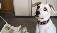Vlasnik psa slikao je svog malog zločinca, bilo ga je sram onoga što je učinio