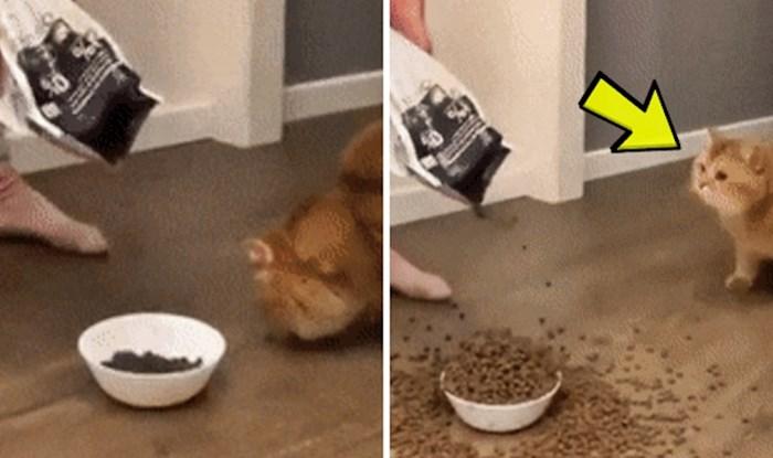 Mačka je mislila da joj je vlasnica pukla, pogledajte kako je reagirala kad joj je davala hranu