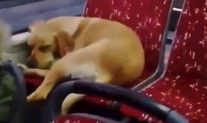 VIDEO Vozač je dopustio promrzlom psu da uđe u gradski autobus, njegova reakcija topi i najhladnija srca