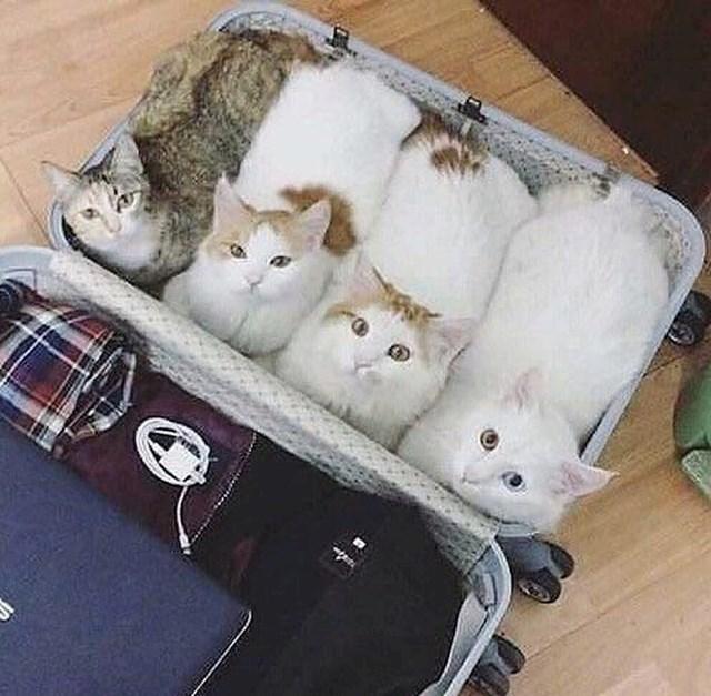 """""""Na put nosim samo najpotrebnije..."""""""