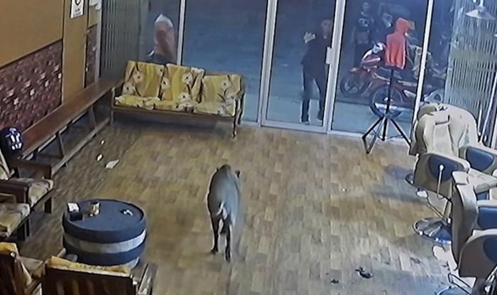 Neočekivani gost došao na šišanje, frizeri u šoku gledali što se događa pred njihovim očima