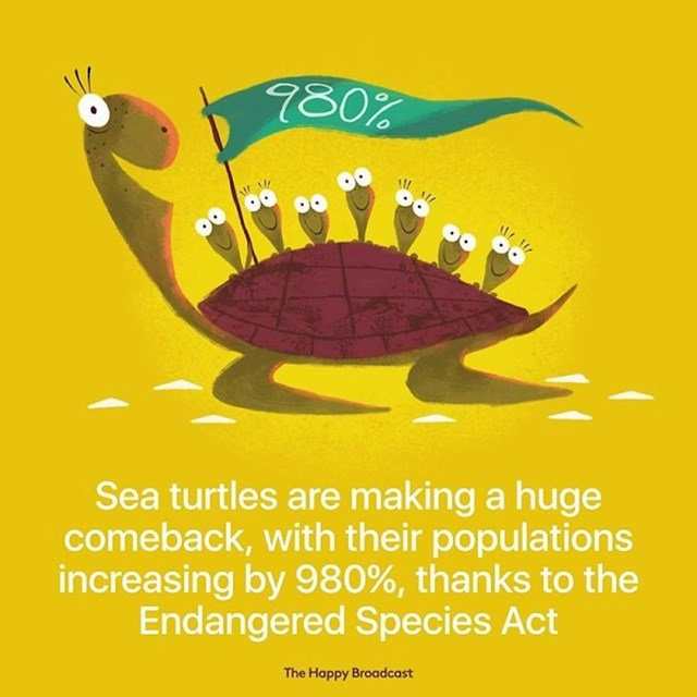 Populacija morskih kornjača raste velikom brzinom, zahvaljujući Zakonu o ugroženim vrstama, broj kornjača povećao se za 980%.