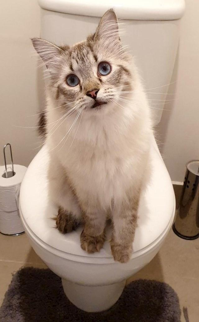 """""""Želi da je mazim svaki put kad idem na WC. Svaki put."""""""