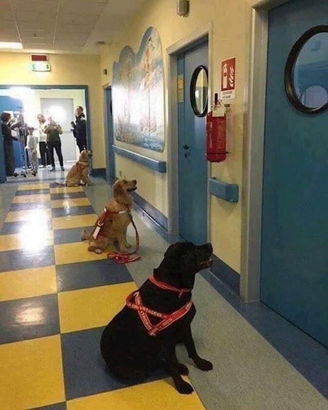 Ovi psi su jedva čekali da uđu u bolničke sobe s bolesnom djecom kako bi se igrali s njima.