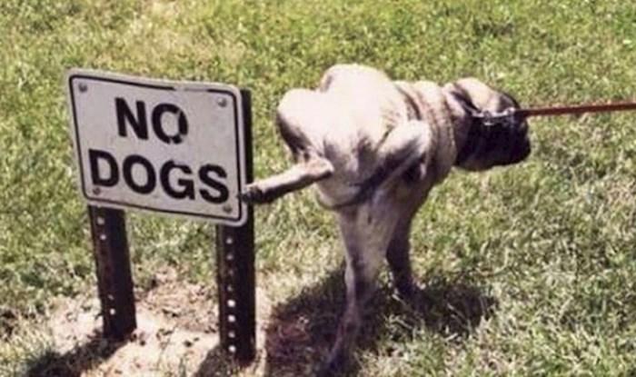 20 smiješnih slika životinja koje ljudska pravila i zakoni uopće ne zanimaju