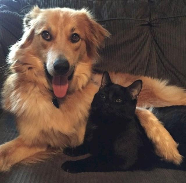 """""""Nakon nekoliko mjeseci, konačno je prihvatila novog psa... iako joj nije baš bilo drago, vidjelo se to na njenom licu."""""""