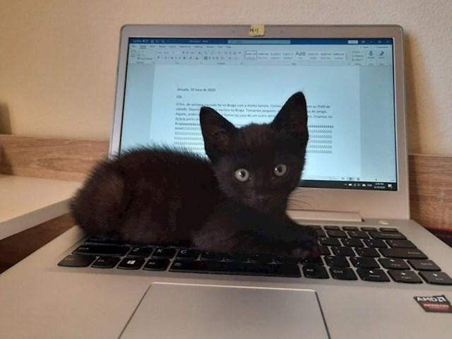 """""""Dobio sam ovog mačića. Sad mi je jasno zbog čega toliko ljudi kaže da ne može raditi kod kuće."""""""