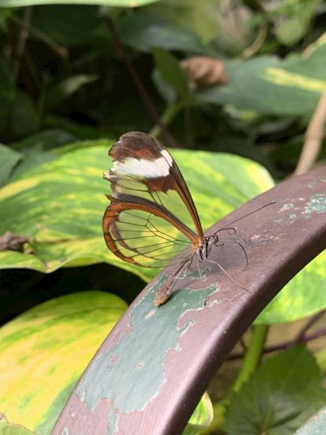 """""""U dvorištu sam vidjela leptira s prozirnim krilima..."""""""
