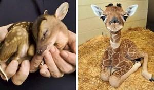 30 najslađih životinjskih beba koje će vam rastopiti srce