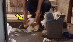 Mačka je vlasniku napravila kaos u WC-u, smijat ćete se kad vidite kako ju je kaznio