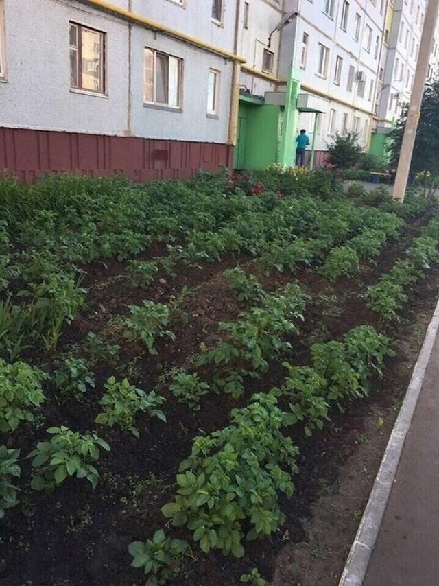 Kome treba farma kad povrće možete uzgajati i ispred zgrade?