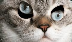 Možete li mački namjestiti oči? Ova igra će vam pojesti živce