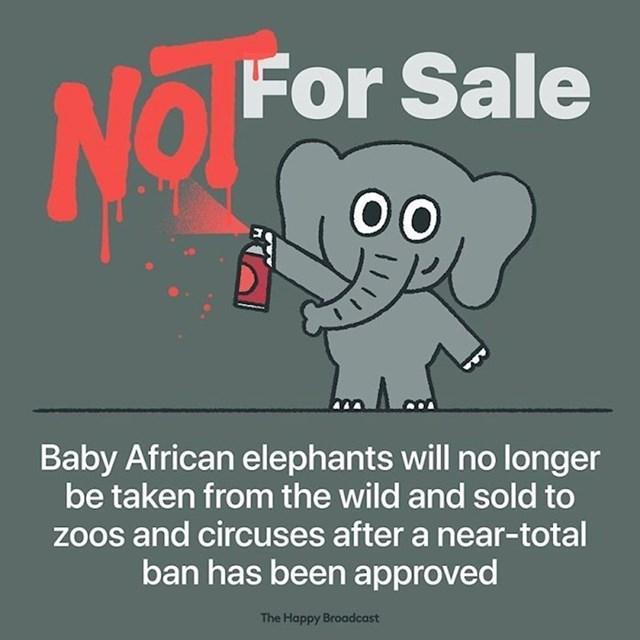 Mladunci afričkog slona više se neće uzimati i prodavati zoološkim vrtovima i cirkusima nako što je potpuna zabrana odobrena.
